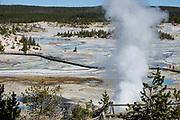 Porcelain Basin, Norris Geyser Basin. Yellowstone National Park, Wyoming, USA.