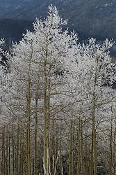 Winter in Santa Fe, NM on The Santa Fe Mountains