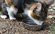 """Blind Cat Goes Hiking, Is Adorable Example Of How To Live<br /> <br /> Go for a contemplative hike at Mason Lake in Washington with Honey Bee, a blind cat who communes with nature in her own way.<br /> """"Honey Bee: Blind Cat Hiking"""" isn't full of goofy pet hijinks or anything; it's just a sweet look at a cool kitty taking in some beautiful country.<br /> Honey Bee was adopted by her owners through Animals Fiji, according to the YouTube video, above, which was posted last week. The clip asks others to consider adopting a special-needs pet. According to the ASPCA, most blind cats """"can adapt very well with their other senses.""""<br /> Looks like Honey Bee is doing just fine.<br /> ©Honeybee/Exclusivepix"""