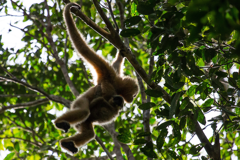 Mother Gibbon
