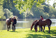 © Licensed to London News Pictures. 14/05/2014. Windsor, UK. People exercise horses on the banks of the River Thames on the opening day of The Royal Windsor Horse Show, set in the grounds of Windsor Castle. Established in 1943. Photo credit : Stephen Simpson/LNP