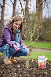Feeding a fruit tree with sulphate of potash