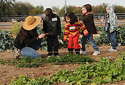 Kindergarteners from Rio Vista Elementary School visit the Tucson Village Farm, Tucson, University of Arizona, USA.
