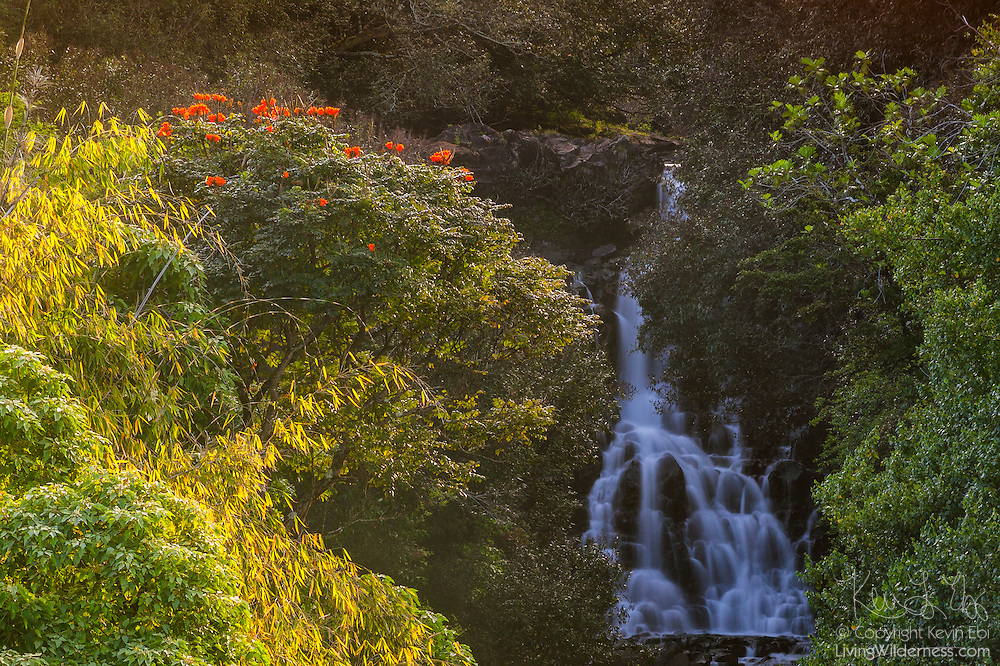 Colorful tropical vegetation frames a serene waterfall downstream from the triple-tier Umauma Falls on the Big Island of Hawaii near Hilo.