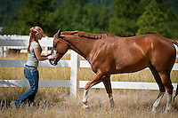 JEROME A. POLLOS/Press..Kelly Hamlin, 15, guides her horse 7-year-old horse, Docs Cruzen Hollywood, along a fence Tuesday at her home near Kidd Island Bay. Hamlin won the world champion 3-year-old mare title Saturday at the Ford American Quarter Horse Youth Association World Championship Show in Oklahoma City with another one of her horses, Miss Miraculous.