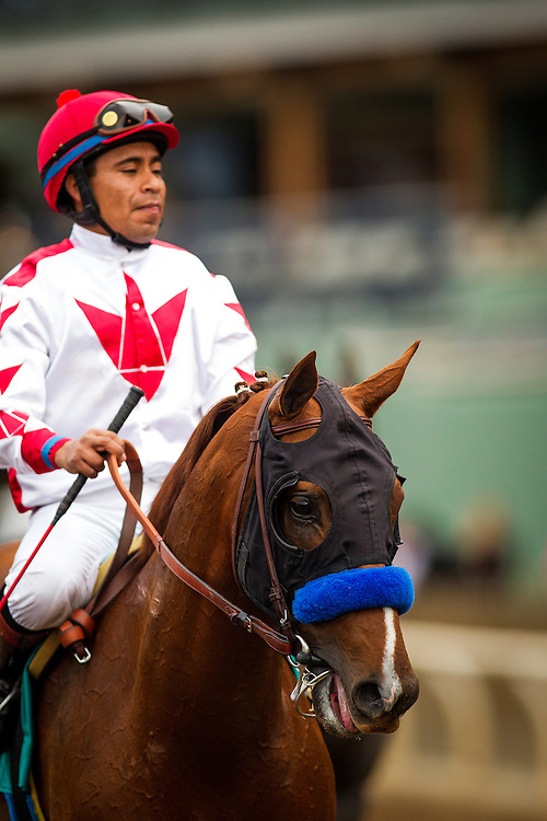 January 09, 2016: Collected with Martin Garcia up wins the Sham Stakes at Santa Anita Park, Arcadia CA. Evers/ESW/CSM