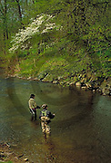 Outdoor recreation, Fishing, Yellow Breeches Creek Trout Fishing