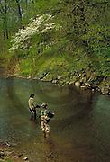 Outdoor recreation, Fishing, Yellow Breeches Creek Trout Fishing