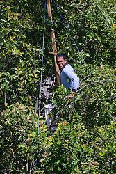 27.07.2014, Bali, IDN, Natur und Sehenswuerdigkeiten in Indonesien, im Bild Bauer erntet Nelken, Gewuerznelken (Syzygium aromaticum) von einem Gewuerznelken-Baum, Munduk, Bali, Indonesien. EXPA Pictures © 2014, PhotoCredit: EXPA/ Eibner-Pressefoto/ Schulz<br /> <br /> *****ATTENTION - OUT of GER*****