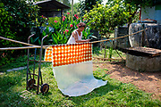 Mango Leather (Mamuang Guan หนังมะม่วง), a Thai sweet snack, drying on the clothes line in rural Thailand.