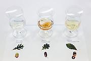Yamazaki, November 22 2011 - Suntory whisky distillery in Yamazaki, Japan. Tasting of 3 whiskies maturated in casks made of 3 differents oaks.