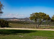 Vineyard views from the newer winery Azienda Vitivinicola Capichera