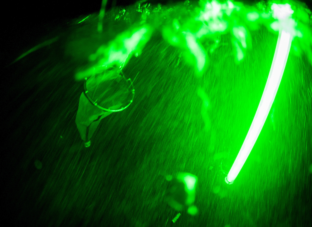 A green light attracts plankton to a net at night off Long Island, Bahamas looking for larval Nassau Grouper.