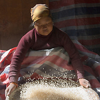 Sifting rice in the highlands of Nepal