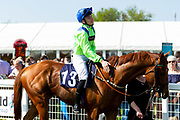 Rampant Lion ridden by Callum Shepherd and trained by William Jarvis - Ryan Hiscott/JMP - 19/04/2019 - PR - Bath Racecourse- Bath, England - Race 4 - Good Friday Race Meeting at Bath Racecourse