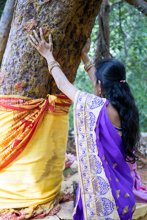 THIMMAMMA MARRIMANU, INDIA - 2nd November 2019 - The Thimmamma Marrimanu banyan tree is the world's largest single tree canopy. Many pilgrims believe that contact with the tree can channel positive energy that's good for the body, mind and soul.