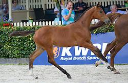 030 - Idaletta M<br /> Finale springveulens<br /> KWPN Paardendagen Ermelo 2013<br /> © Hippo Foto - Leanjo de Koster