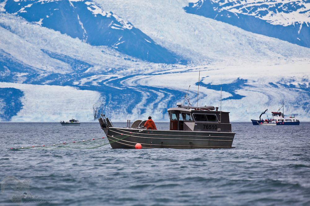 Fisherman Ian Lindsey tows his gillnet in front of Harvard Glacier in College Fiord, Prince William Sound, Alaska.