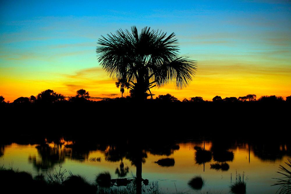 Santa Fe de Minas_MG, Brasil...Arvore Buriti (mauritia flexuosa) em uma paisagem em Santa Fe de Minas...The tree Buriti (mauritia flexuosa) in a landscape in Santa Fe de Minas...Foto: LEO DRUMOND / NITRO