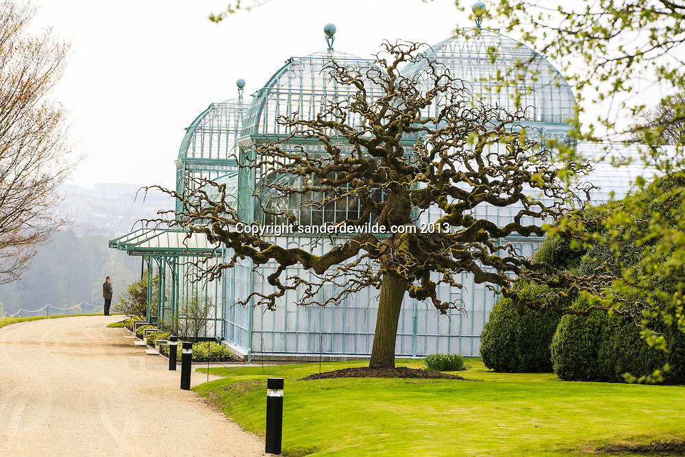 Brussels,Laken,  April 19th 2013. Two weeks a year the Royal Greenhouses,next to the royal palace of King Albert, are open to the public. King Leopold II built the first art nouveau greenhouse in 1874, designed by the French architect Alphonse Balat.surreal branches of Sophora japonica in the sky, in front of the royal greenhouses