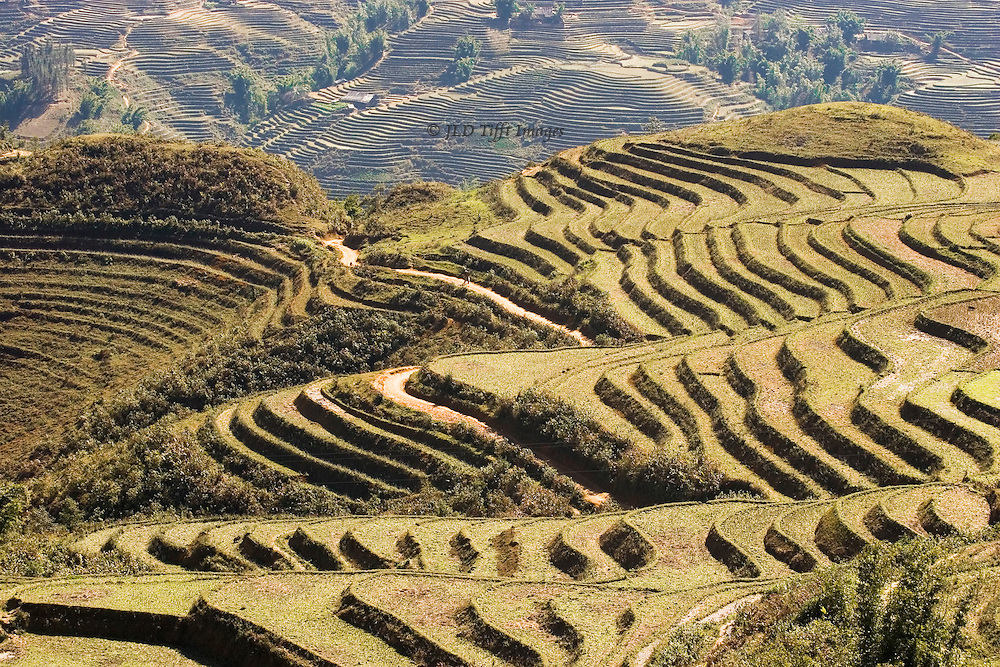 Sharp and shapely hills form a complicated landscape in the North Vietnam tribal region.  Most are systematically terraced for growing rice, knitted together by narrow footpaths that form bright ribbons across the scene.   The scene forms a complex curving visual geometry.