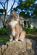Stock photography of a cat at the historic Crescent Hotel in Eureka Springs, Arkansas.
