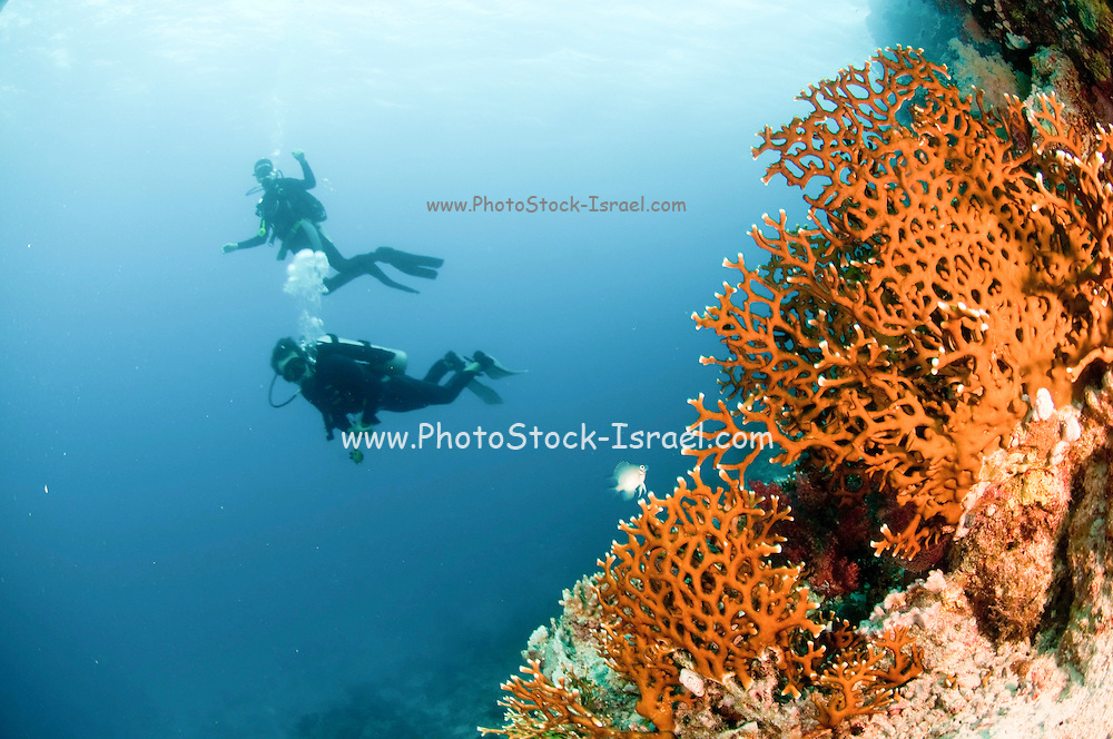 Scuba divers in the water photographed at Ras Mohammed National Park, Red Sea, Sinai, Egypt,