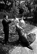 "14/05/1965<br /> 05/14/1965<br /> 14 May 1965<br /> National Seafood Cook 1965, visits the Zoo. Miss Mary Kenny of Donaghmore, Dundalk, the BIM ""National Seafood Cook 1965"", visited the Zoological Gardens, Dublin and fed the best fish eater in Ireland- an elephant seal which recently arrived from the Falkland Islands. Also in the picture, on right, is Miss Catherine Carroll, Bord Iascaigh Mhara."