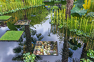 The World Vision Garden<br /> Silver Gilt Silver Gilt<br /> Designer: John Warland<br /> Sponsor: World Vision<br /> <br /> Water feature pool with submerged planted box containers. Planting includes cacti, succulents and grass.
