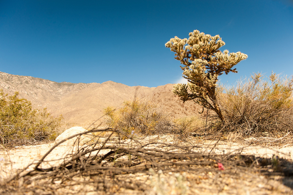 Cactus in the desert near Palm Springs, California