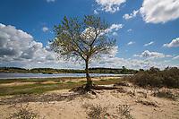 BLOEMENDAAL - Kennemerduinen , Nationaal Park Zuid-Kennemerland. Duinmeer,  ANP COPYRIGHT KOEN SUYK