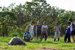 A group of tourists watch a Galapagos tortoise / Galápagos giant tortoise (Chelonoidis nigra porteri), Galapagos Islands National Park, Santa Cruz Island Galapagos Ecuador