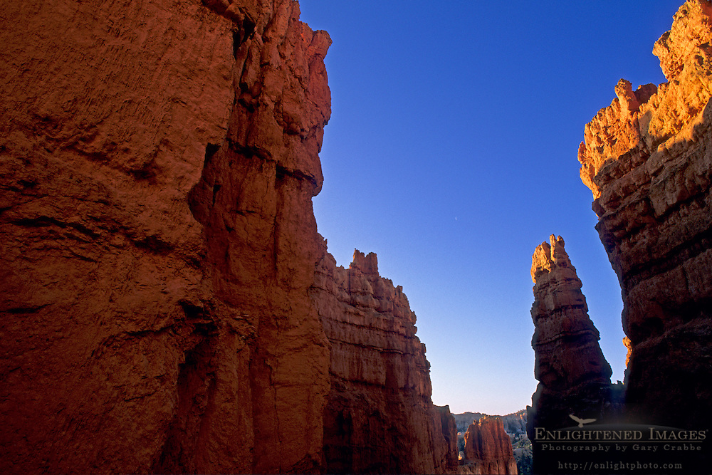 Sunrise light on hoodoos (note: moon) from the Navajo Loop Trail, Bryce Canyon National Park, UTAH