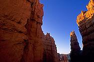 Sunrise light on hoodoos (note: moon) from the Navajo Loop Trail, Bryce Canyon National Park, UTAH