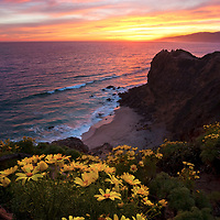 Last Saturday was one of the best burns I've seen in a while. Since there were wildflowers blooming I opted to head back to one of my favorite spots in Malibu out at Point Dume. I was excited to see the whole hillside of the point carpeted with yellow coreopsis. I hiked to the end of Point Dume that overlooks the Pirates Cove and the expansive Pacific Coast. The clouds burned as the colors were incredible. To top it off a whale came swimming around the cove. What a night!