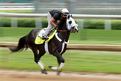 Derby 142 hopeful Tom's Ready with <br /> Emerson Chavez up were on the track for training, Tuesday, May 03, 2016 at Churchill Downs in Louisville.