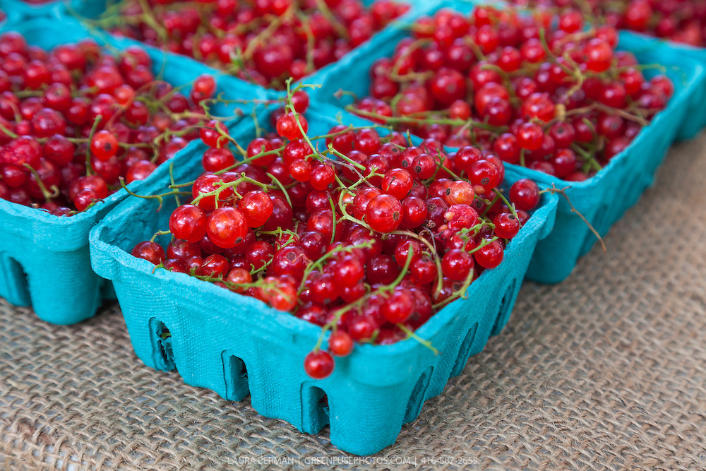 Red currants in 1/2 pint boxes at a farmers market (Ribes rubrum).