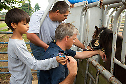 John Allen farm manager and animal Care supervisor along with Anton Sigsgaard, 8, left, helps his father Dr. Martin Nielsen collect blood samples from ponies on a UK research farm Tuesday. <br /> <br /> The Grayson Jockey Club Foundation plays a key role in the health of the Thoroughbred industry by funding important research. <br /> <br /> UK research Ph.Ds, Dr. Martin Nielsen and Dr. David Horohov are conducting research on a group of ponies by analyzing their vitals after de-worming and vaccinating the equids. They want to see if giving both regimens have negative effects on each other., Tuesday, Aug. 06, 2013 at the C. Oran Little Research Center in Versailles.
