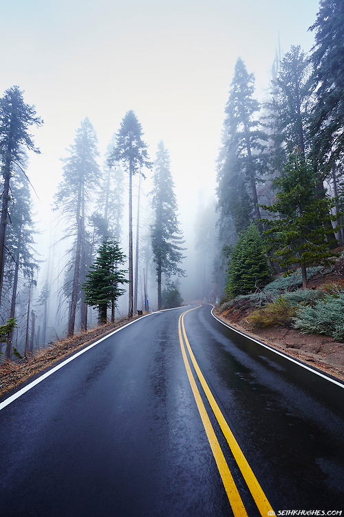 The Generals Highway in Sequoia National Park winds through the foggy Giant Forest in the Sierra Nevada mountain range of California.