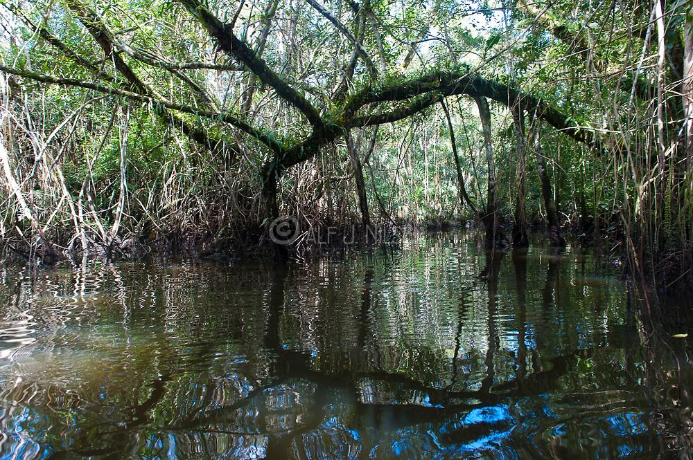 Dense vegetation in the submerged rainforest surrounding Lake Mandicocha, central Ecuador.