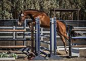 Horse No 49