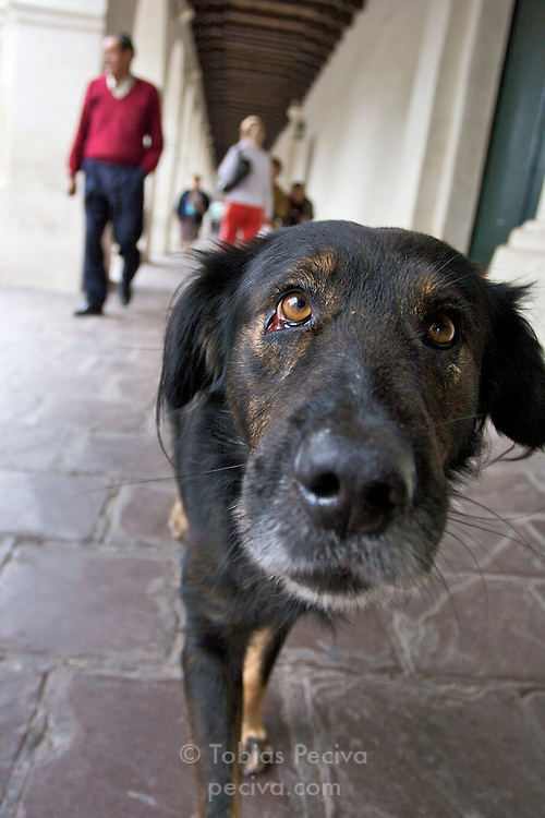 Portrait of a stray dog in Salta, Argentina. Stray dogs are a common sight in most Argentine cities.