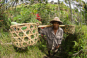 A farmer harvests rice in the rice terraces of Ubud, Bali.