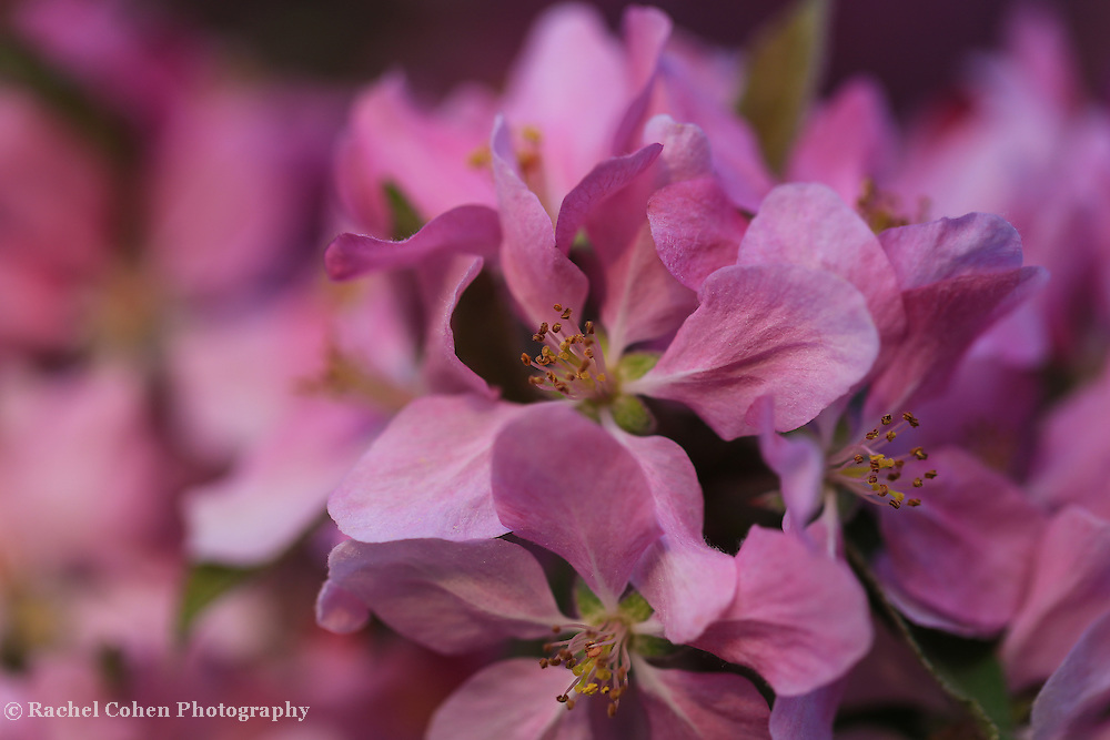 &quot;Feel the Love&quot;<br />