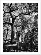 Amazing trees and granite formations along the Junction Walk, Kwiambal National Park [Kwiambal NP, NSW]<br /> <br /> To purchase please email orders@girtbyseaphotography.com quoting the image number PA006861BW, and your preferred print size. You will receive a quick reply recommending print media options to best suit your chosen image, plus an obligation-free quotation. Current standard size prices are published on the Pricing page.