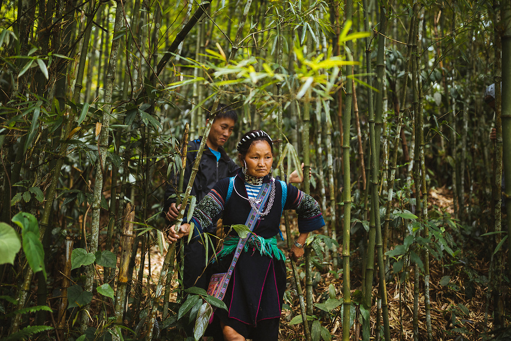 A Hmong guide leads a tour group through a bamboo forest in the Muong Hoa valley in northern Vietnam.