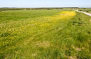 Spring wildflowers in blossom on chalk grassland on Salisbury Plain, near Larkhill, Wiltshire, England, UK