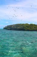 A frigate bird colony<br /> Aldabra Atoll, The Seychelles