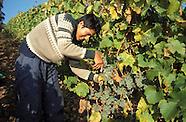 Weinanbau an Rhein, Mosel und Ahr :: Winegrowing in Germany