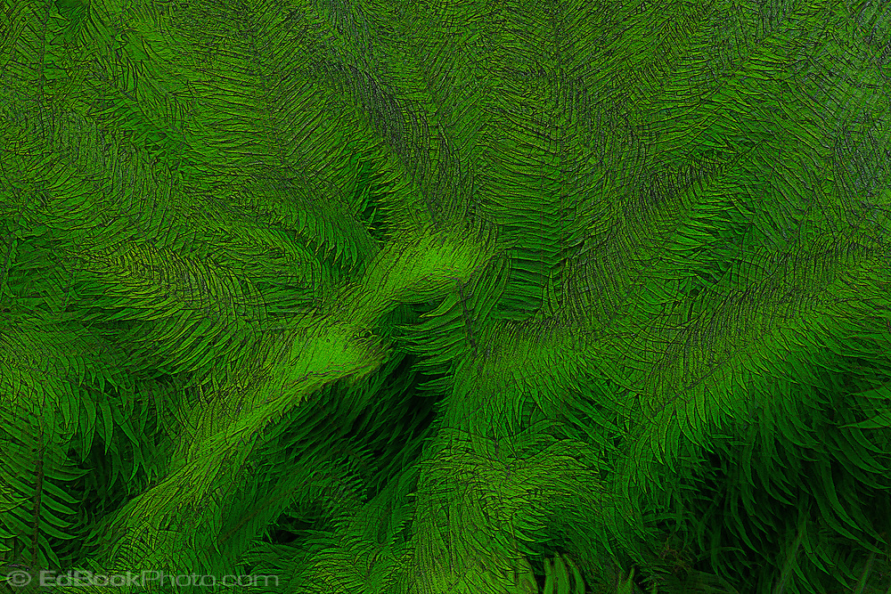 Surreal digital painting Western Sword Fern, (Polystichum munitum) Kitsap Peninsula, Puget Sound, Washington state, USA